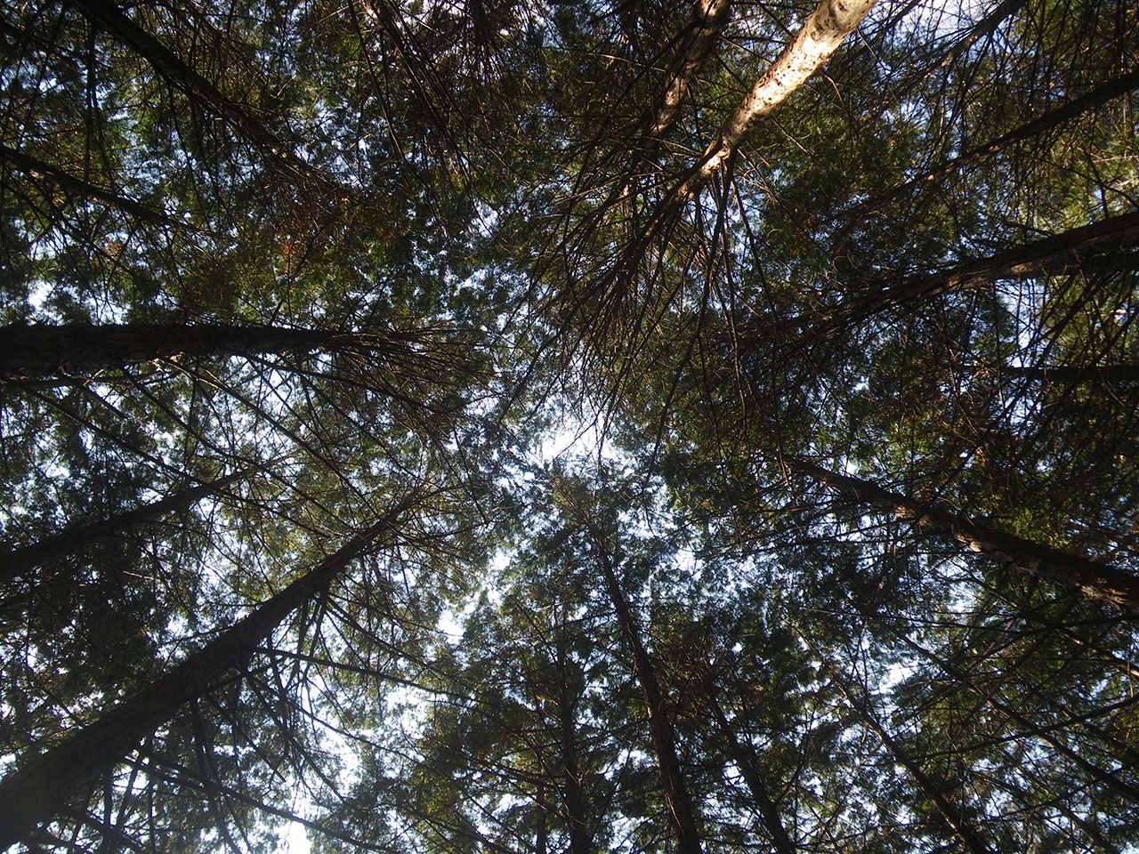 pentax w60で撮影した木々