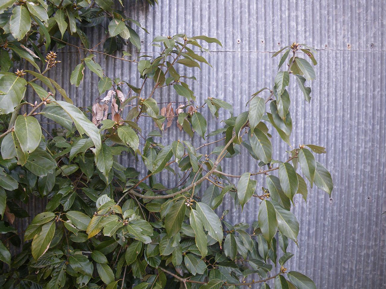 pentax w60で撮影した木とトタン