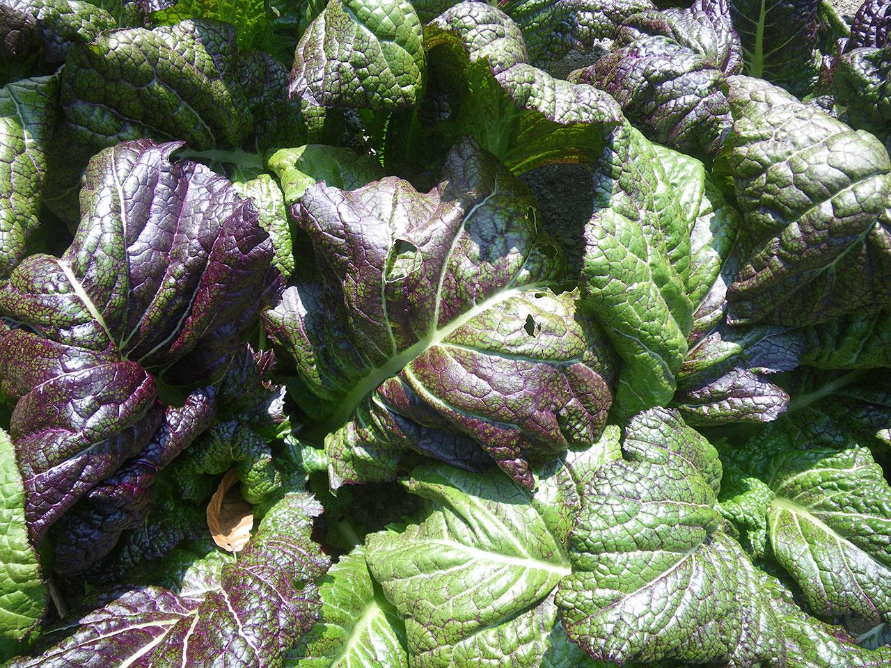 pentax w60で撮影した野菜