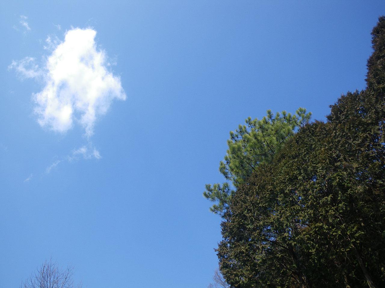 pentax w60で撮影した空と木